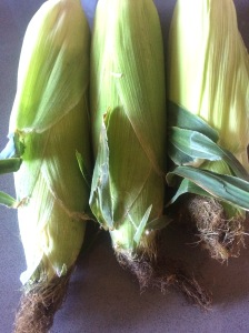 Organic corn is a hybrid from grasses cultivated by Native Americans.
